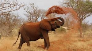 elephantdust