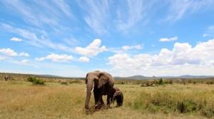 elephantsmara